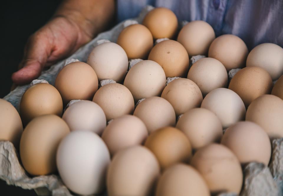 empaques-pulpa-moldeada-huevos-2
