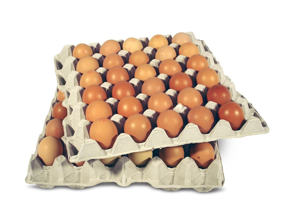 empaques-pulpa-moldeada-huevos